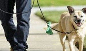 Curso: Tenecia responsable de perros