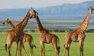 Los animales de Terra Natura llegan al centro de la ciudad