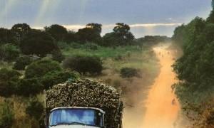 Mathias Gómez Martial expone sus imágenes sobre Africa en Los Molinos